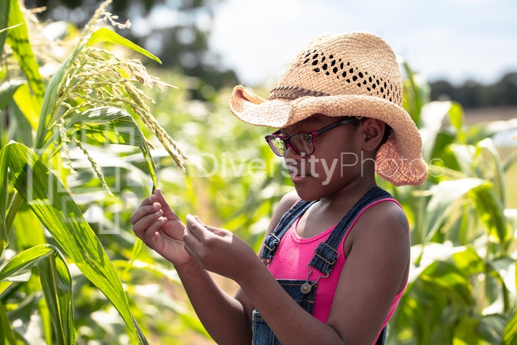 Young girl inspecting corn on family farm